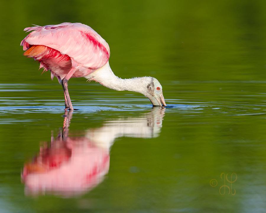 Everglades National Park � Eco Pond | artisticpx.com