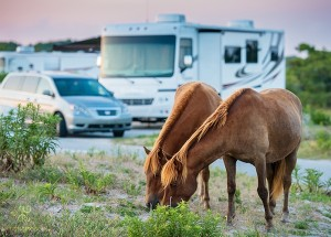 camping with the ponies at assateague